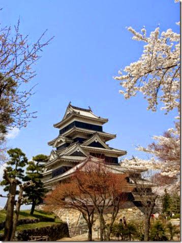christian-kober-cherry-blossoms-matsumoto-castle-matsumoto-city-nagano-prefecture-honshu-island-japan-asia