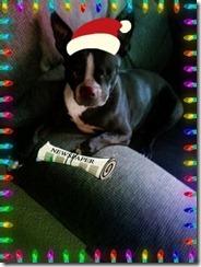 ginger reading the news christmas