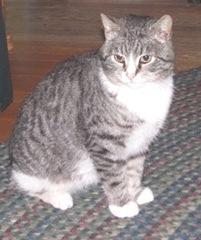 4.13.11 stray kitty2