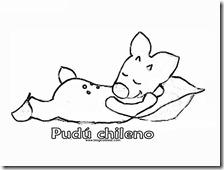pudus chileno (6)