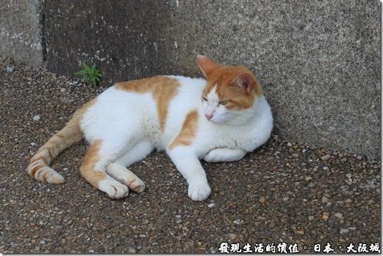 日本大阪城,天氣熱得連貓咪都懶洋洋的了。