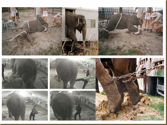 crueldade-elefantes