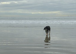 Abby at the Dog Beach on Coronado