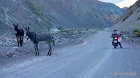 niemand da ...außer zwei Esel