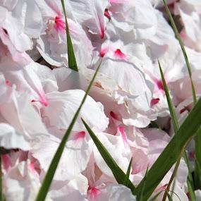 Spring_09.jpg