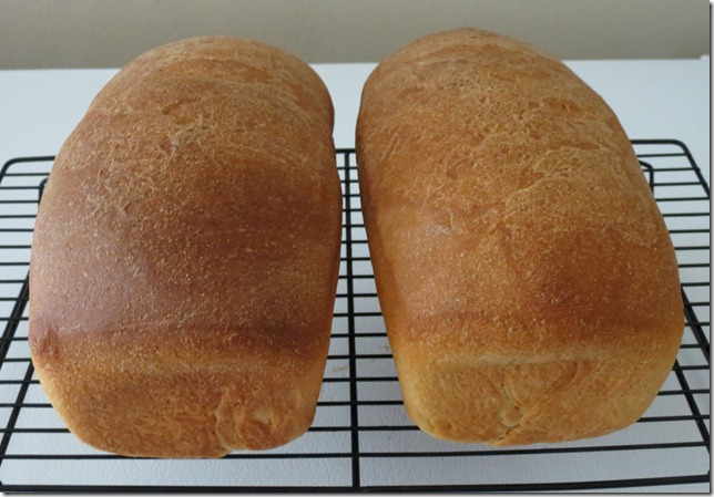 Whole Wheat Loaves