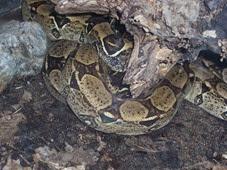 2014.04.21-046 serpent