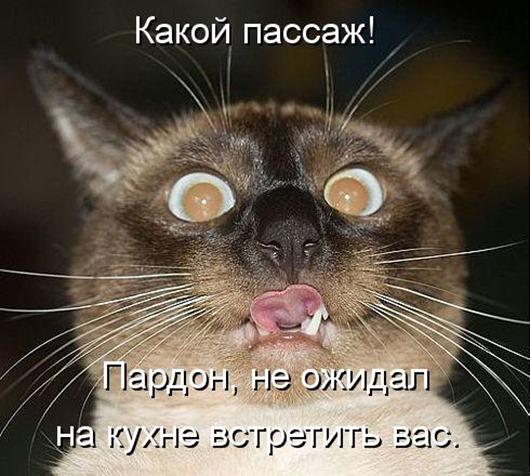 1395372419_kotomatritsa_np-1