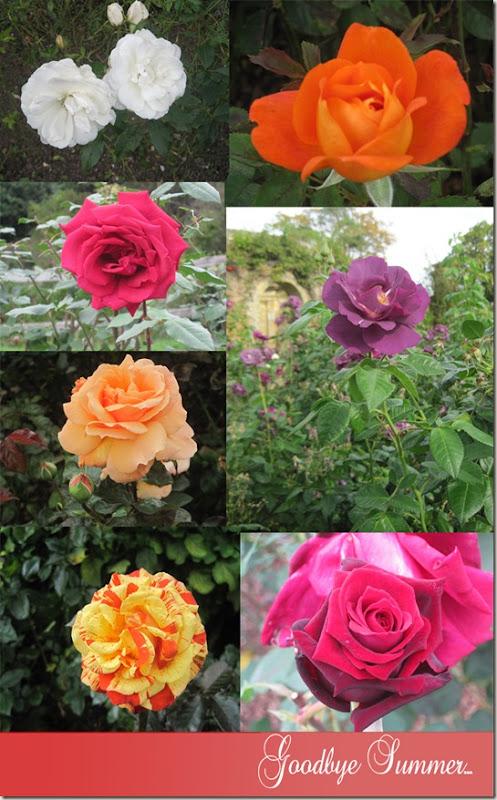Roses_edited-1