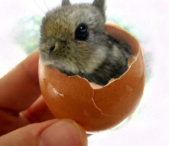 Cutest Bunny ever in an egg shell