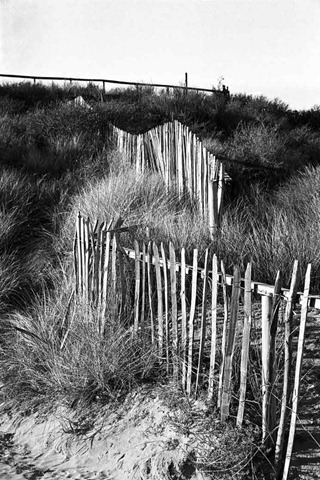 Sand-Dune-Fencing-7
