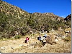 Wild Burro Hike Jan 21 077 (2)
