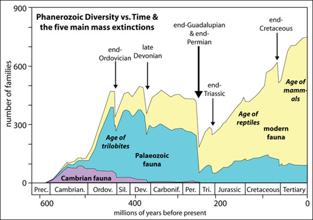 Phanerozoic diversity vs. time, and the five main mass extinction events. Graphic: Washington Post