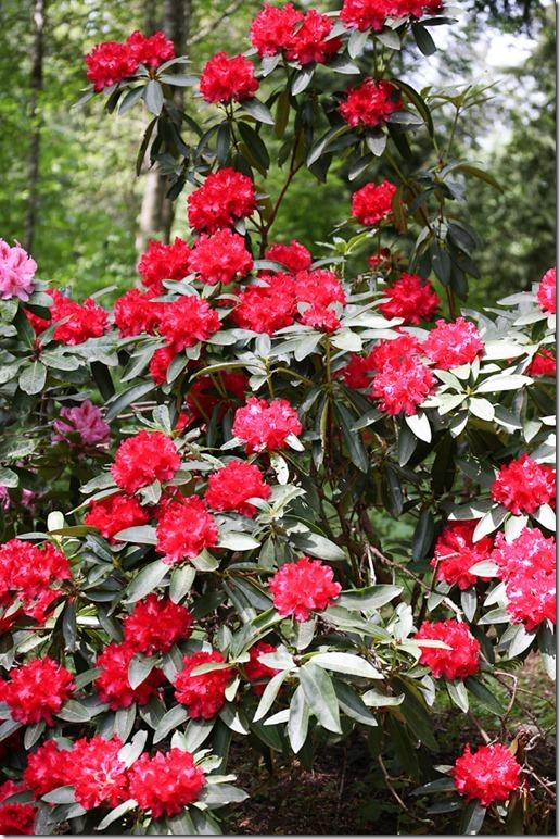 Garden May-14-blog