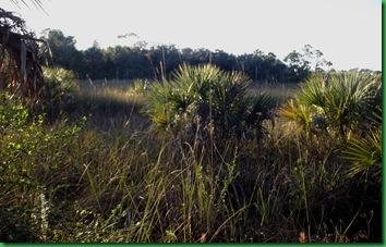 Fakahatchee,  Collier-Seminole, Pather NWR & Chokoloskee 137
