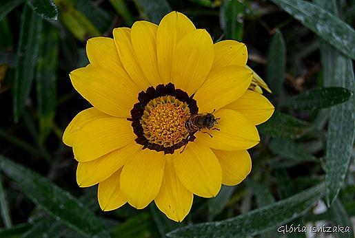 Glória Ishizaka - Flor amarela 27