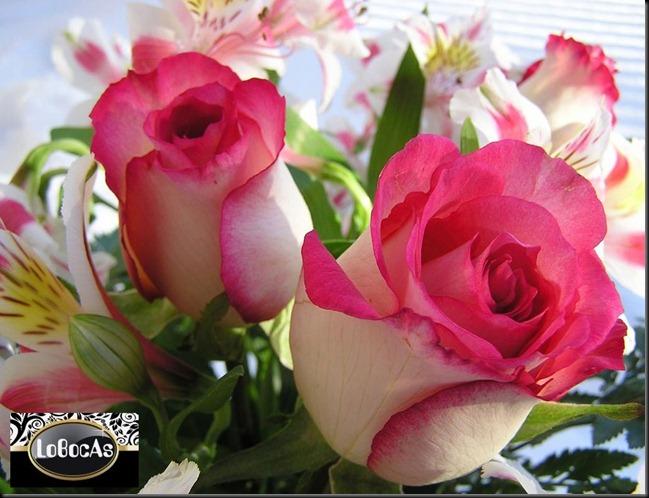 Flores2012-02LoBocAs