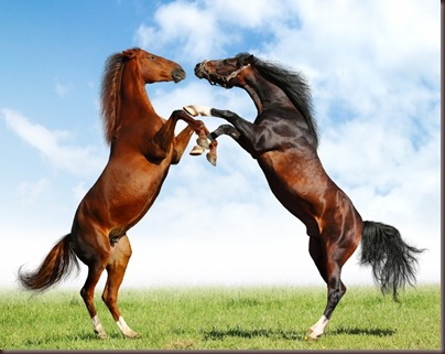 Amazing Animals Pictures Horse (2)