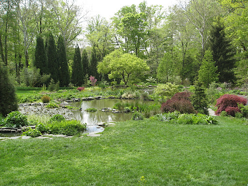 This overall view shows how meandering the pond garden is.