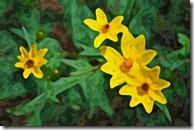 AE-WatercolorSponge-10-600