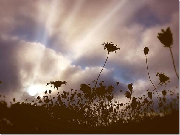 Raios de sol (3)