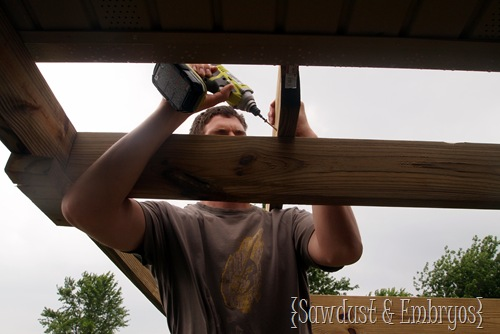 Building a Pergola (Sawdust & Embryos)