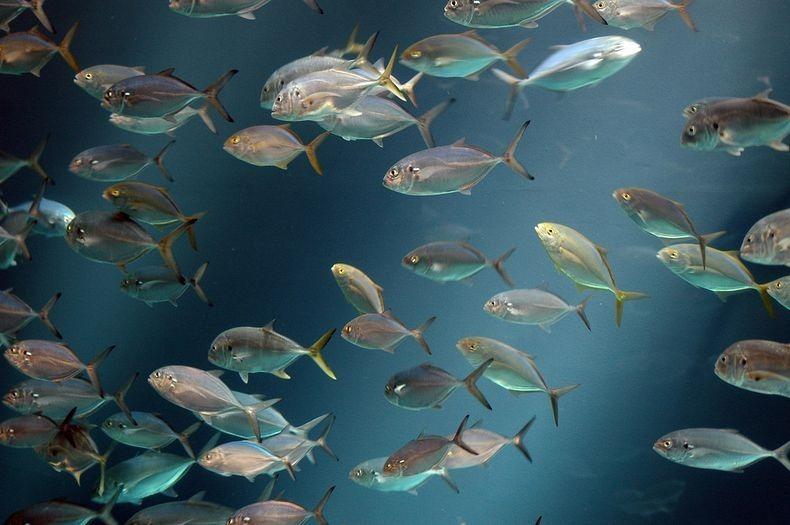 georgia-aquarium-11