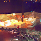 Houston Museum of Natural Science - 116_2762.JPG