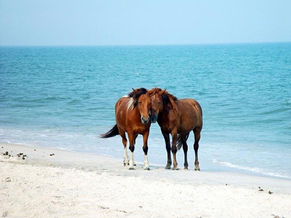 Wild horse in the beach