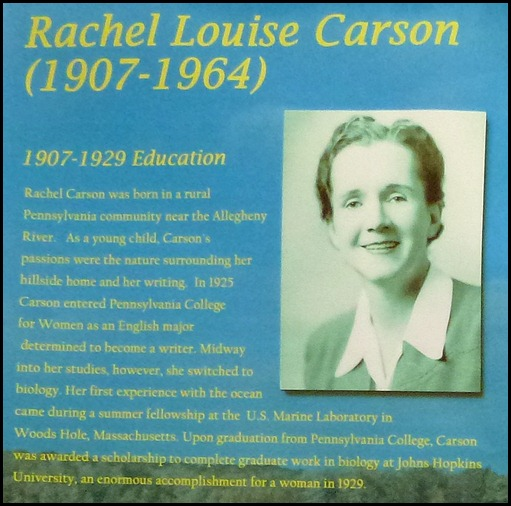 the connection between rachel carson s a
