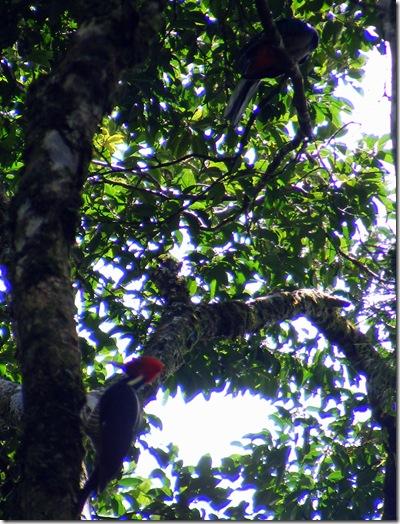 2010_0831carppajaroyquetzal0024