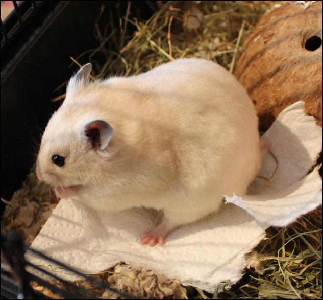 Hamsterzuwachs