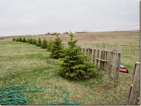 tree planting 722