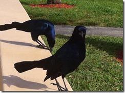 begging birds