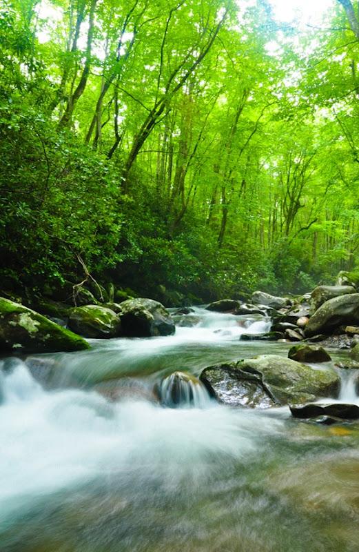 porters creek-5426