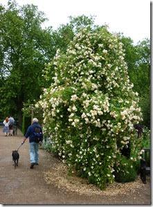 3 hyde park rose garden 2