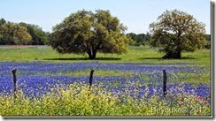 Springtime-in-the-Texas-Hill-Country[2]