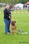 20100513-Bullmastiff-Clubmatch_31017.jpg