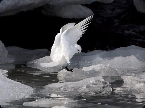 Polar Obsession12