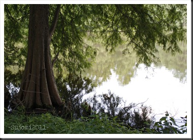 2011 07 14 _MG_3480w