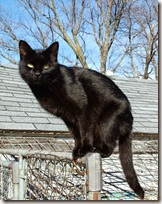 Blackcat-Lilith[1]