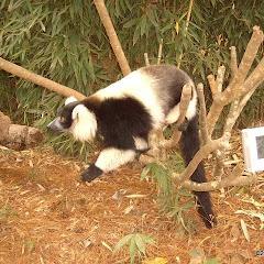 Lemurs Park::IMGP4471