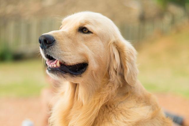 foto de cachorro