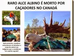 RARO ALCE ALBINO É MORTO POR CAÇADORES NO_thumb[1] (1)