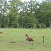 Onze paardjes - www.LandgoedDeKniep.nl