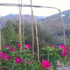 Flowers in Finca lo Martin