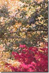 2014-10-26 Oct 26 014