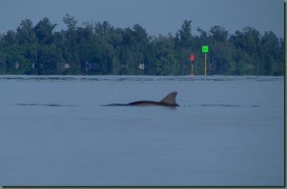 dolphin fishing