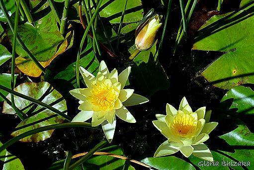 Glória Ishizaka - Flor amarela 25