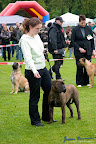 20100513-Bullmastiff-Clubmatch_30927.jpg